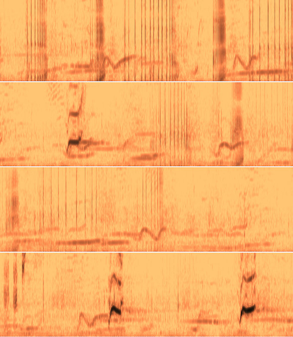 Whale song spectrogram